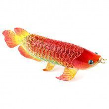 "10"" Large Koi Fish Keepsake"